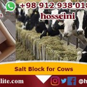 salt block for cows